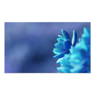 Blue Peace Photo Print