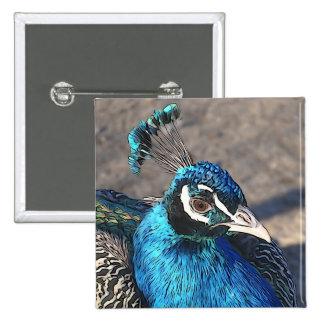 blue peacock 2 inch square button