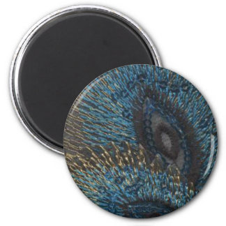 Blue Peacock Feather Fridge Magnets