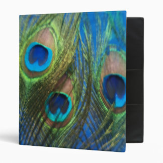 Blue Peacock Feathers 3 Ring Binder