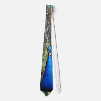 Blue Peacock Full Plumage Tie
