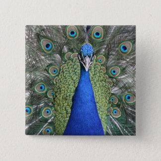 Blue Peacock Portrait 2 Inch Square Button