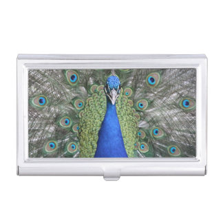 Blue Peacock Portrait Business Card Holder