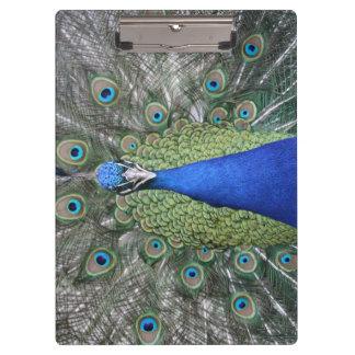 Blue Peacock Portrait Clipboard