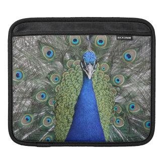 Blue Peacock Portrait iPad Sleeve
