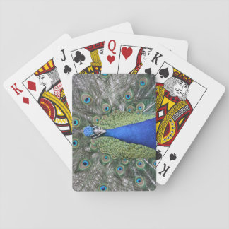 Blue Peacock Portrait Playing Cards