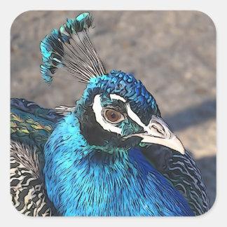 blue peacock square sticker