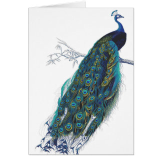 Blue Peacock with beautiful tail feathers Card