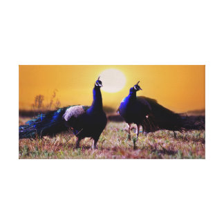 Blue peacocks stretched canvas prints