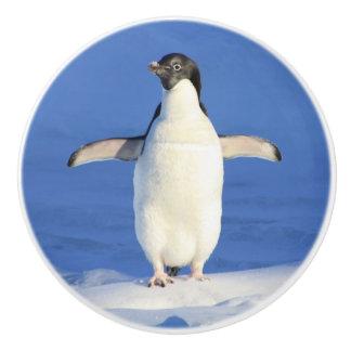 Blue penguin ceramic knob