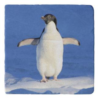 Blue penguin trivet
