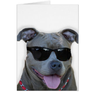 Blue pitbull with glasses cards