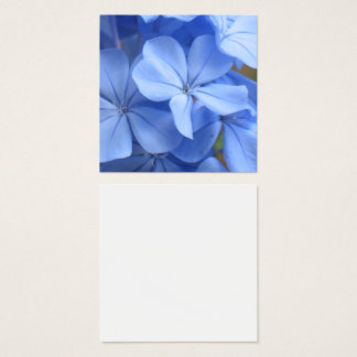 Blue plumbago flowers macro photography square business card