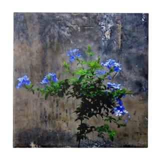 Blue Plumbago Tile
