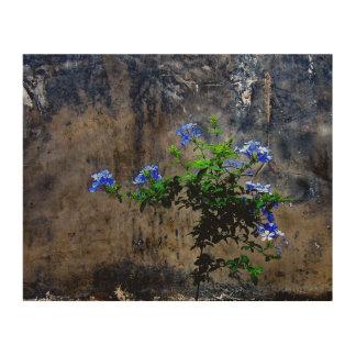Blue Plumbago Wood Print