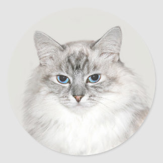 Blue point Himalayan cat Round Sticker