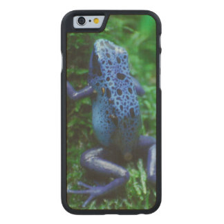 Blue Poison Arrow Frog Carved® Maple iPhone 6 Slim Case