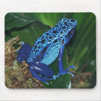 Blue Poison Arrow Frog Portrait Mouse Pad
