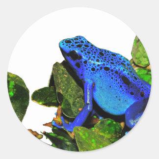 Blue Poison Dart Frog Classic Round Sticker