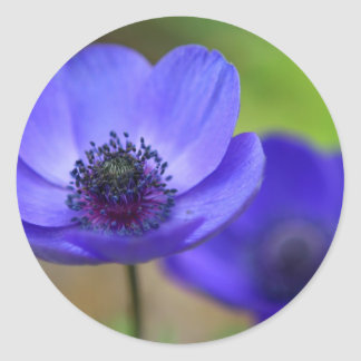 Blue Poppy Flowers Round Stickers