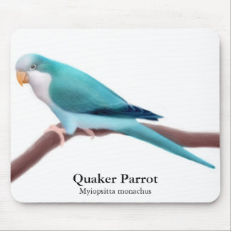 Blue Quaker Parrot Mousepad