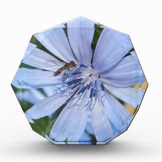 Blue Radicchio Flower N Bee Photo Block