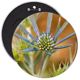 Blue rays 6 inch round button