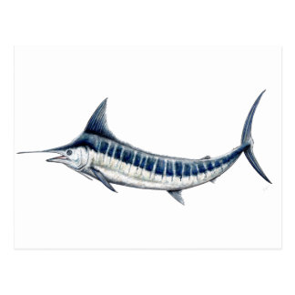 Blue-redbubble Marlin Postcard