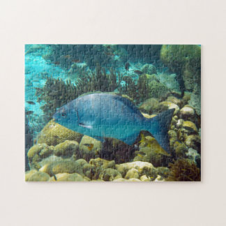 Blue Reef Fish Puzzles