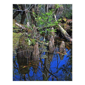Blue Reflections in the Slough (Fort Myers, FL)- F Letterhead
