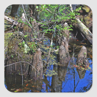 Blue Reflections in the Slough (Fort Myers, FL)- F Square Sticker