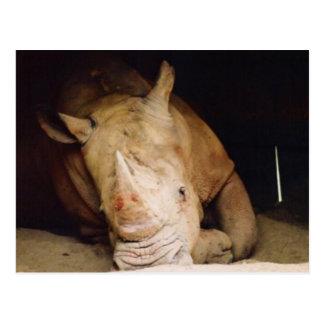 blue rhino postcard