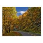 Blue Ridge Parkway curving through autumn colours Postcard