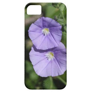 Blue rock bindweed (Convolvulus sabatius) Case For The iPhone 5