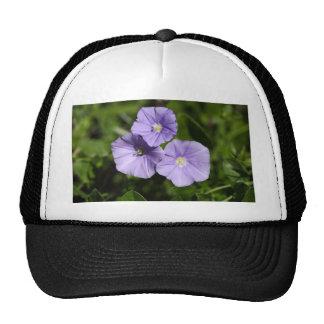 Blue rock bindweed (Convolvulus sabatius) Trucker Hat