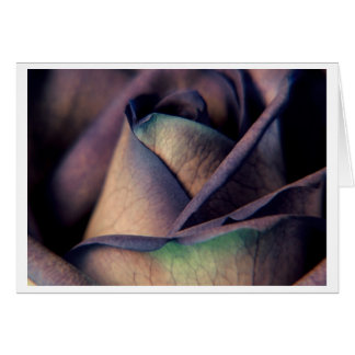 Blue Rose Close up Card