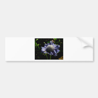 Blue Scabiosa flower Bumper Sticker