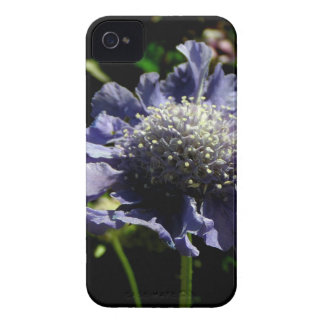 Blue Scabiosa flower iPhone 4 Cases