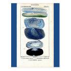 blue seashells vintage botanical French beach art Postcard