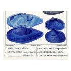 blue seashells vintage botanical French ocean art Postcard