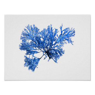 Blue Seaweed #6 42x32cm Lake cottage decor