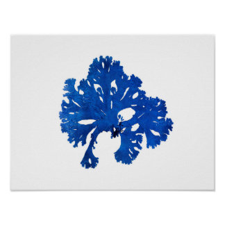 Blue Seaweed #9 42x32 cm Blue coastal decor