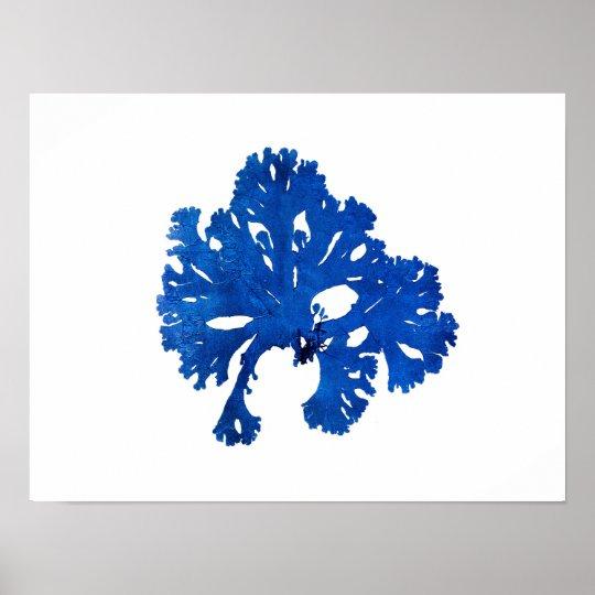 Blue Seaweed #9 42x32 cm Blue coastal decor