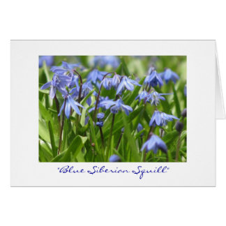 """Blue Siberian Squill"" Card"