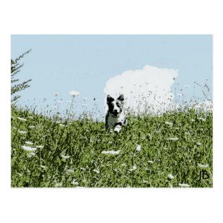'Blue Skies & Sunny Days' Postcard