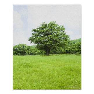 Blue sky and field of grass poster