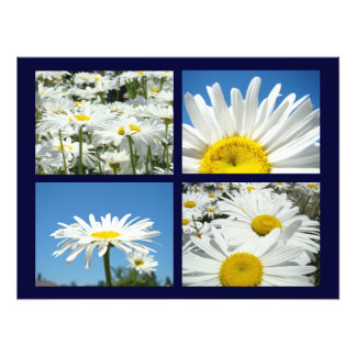 Blue Sky Daisy Flowers Art Prints White Daisies Photo