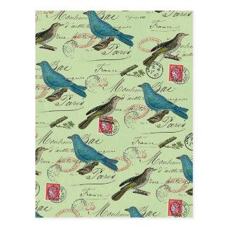 Blue small birds postcard
