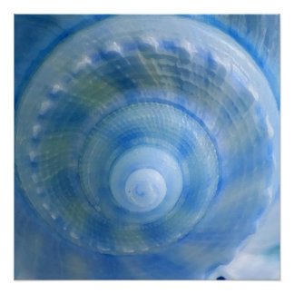 Blue Spiral Seashell Perfect Poster