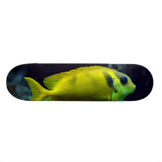 Blue-spotted Spinefoot Fish Siganus Corallinus Skateboard